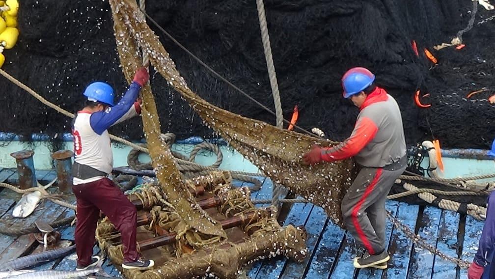 Nirsa desarrolla plantado biodegradable para pesca sostenible