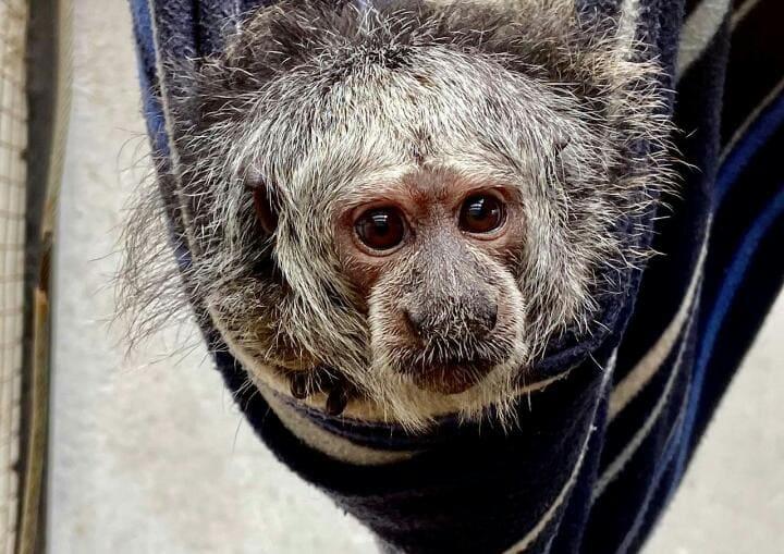 Zoo de Quito inicia campaña de apadrinamiento de animales para conseguir donaciones