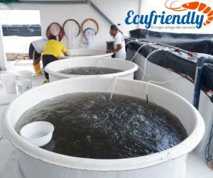 Ecuafriendly, laboratorio de producción de larvas, en constante crecimiento